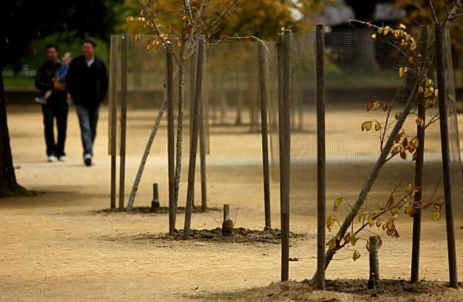 Newly planted young trees lay on their side, Thursday July 22, 2010,  after being cut in the Music Concourse, in Golden Gate Park in San Francisco, Calif. Photo: Lacy Atkins, The Chronicle