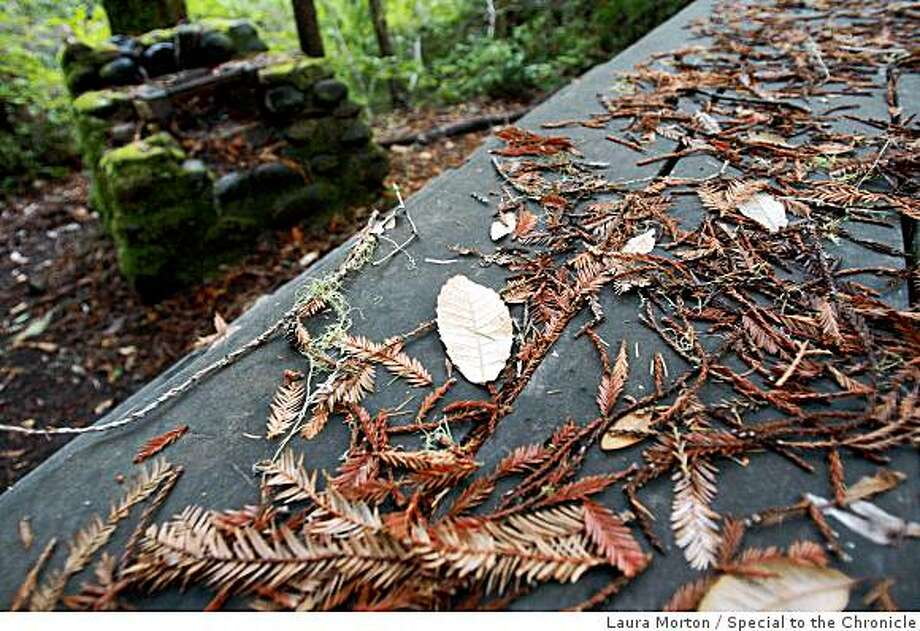 An empty picnic table gathers leaves at the Portola Redwoods State Park in the Santa Cruz Mountains, which is one of the parks on the list that the governor is looking to close.  (Laura Morton/Special to the Chronicle) Photo: Laura Morton, Special To The Chronicle
