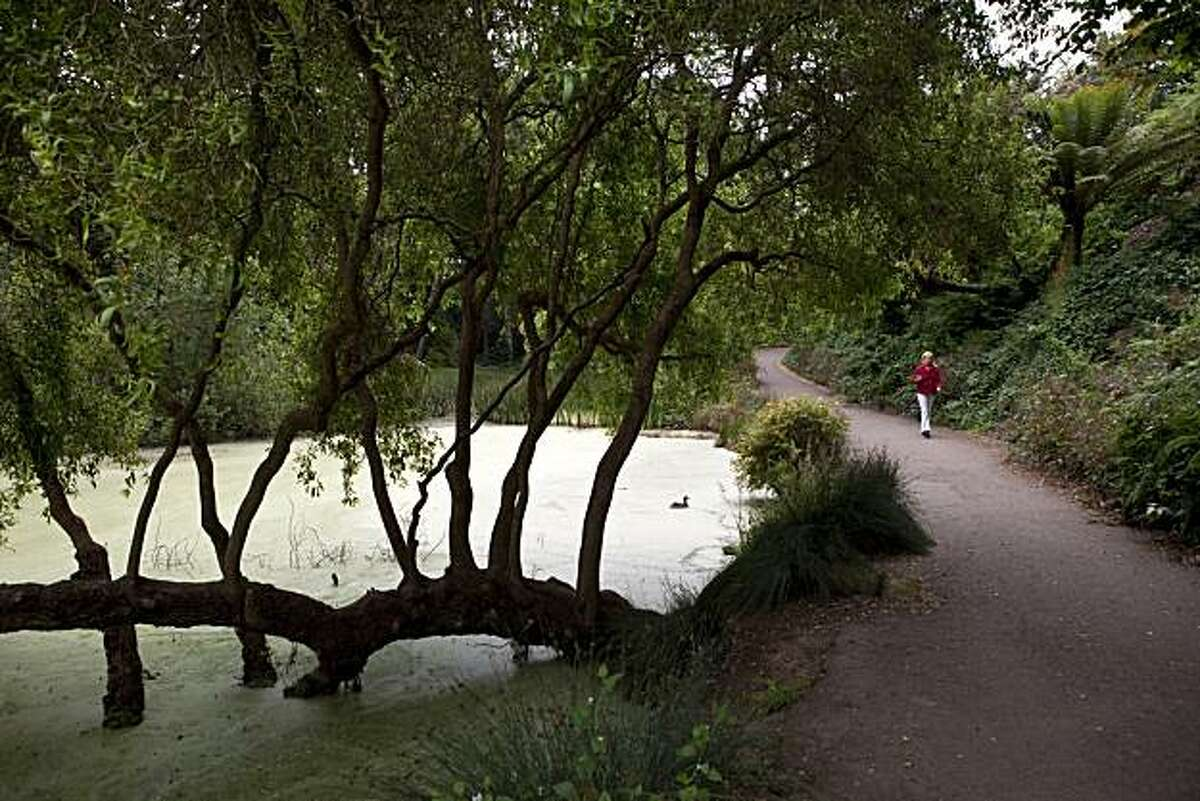 A woman walks past the Lily Pond in Golden Gate Park, which is currently in a bad state and is filled with duck weed and invasive frogs, in San Francisco, Calif., on Friday, July 16 , 2010.