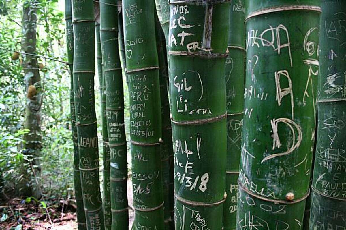 Jungle graffiti adorns a stand of green bamboo on the island of Ilha Grande, a former penal colony 100 miles south of Rio de Janeiro. Since the prison closed in 1994, the island's beaches and rainforest trails have become a destination for growing numbers of travelers.