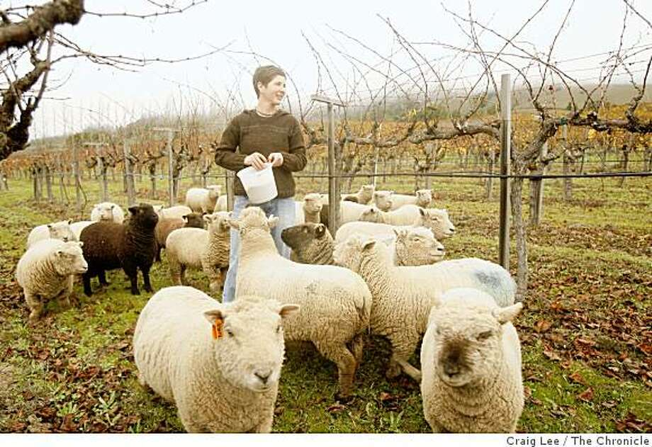 Sarah Cahn Bennett with some of her sheep on the Navarro vineyard in Philo, Calif., on December 3, 2008. They are the children of Navarro Wine founders Ted Bennett and Deborah Cahn. Photo: Craig Lee, The Chronicle