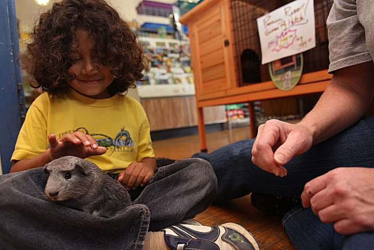 Jackson Galley, 5 years old, holding a guinea pig at Animal Connection, in San Francisco, Calif., on Wednesday, July 7, 2010. San Francisco is considering ban on all pet sales in the city.
