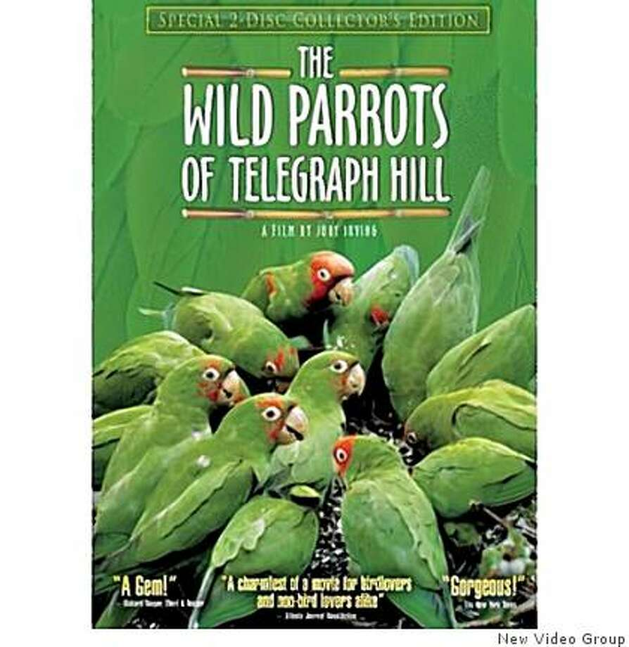 DVD Cover: The Parrots of Telegraph Hill Photo: New Video Group