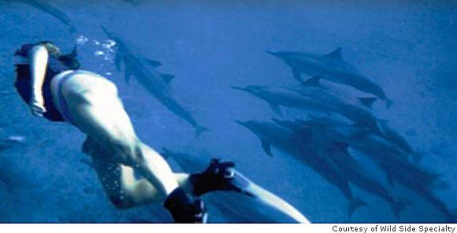 Swimming with wild spinner dolphins off Oahu. Photo: Courtesy Of Wild Side Specialty