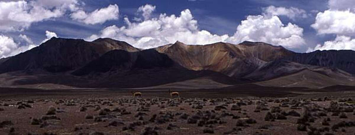 Two guanacos roam along the Altiplano, the 15,000-foot-high Andean plain in Lauca National Park in northern Chile.