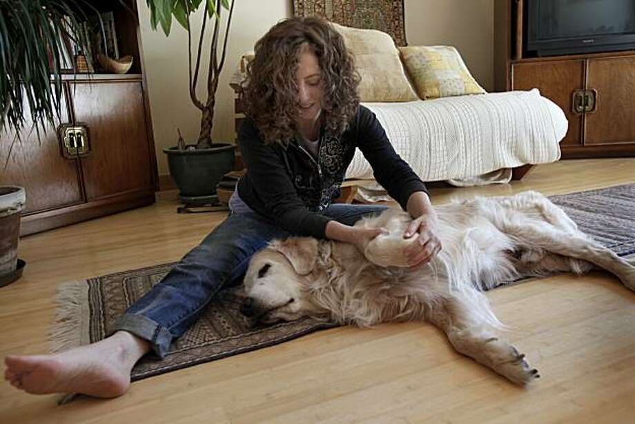 Shelah Barr massages Pico's paw during a recent visit. Shelah Barr massages dogs for a living.  She visits with Pico, a 13 year old Golden Retriever, in San Francisco, Calif. Thursday July 1, 2010. Photo: Brant Ward, The Chronicle