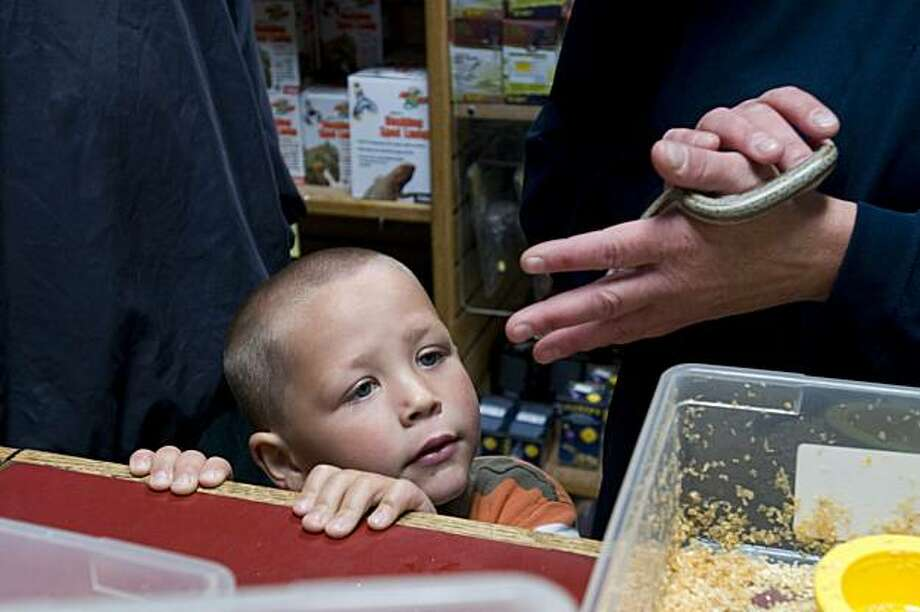 "Aiden Gilman, 5, of Winnemucca, Nev., looks at a ""rosy boa"" held by his mom, Stasey as they consider purchasing it as a pet on June 23, 2010 at the The East Bay Vivarium in Berkeley, Calif., which has been open since 1970 andspecializes in the sale of and public education about reptiles, amphibians, and arachnids.   The Gilmans drove 6 hours from Winnemucca just to come to this store and returned immediately after making their purchase. Photo: Chad Ziemendorf, The Chronicle"