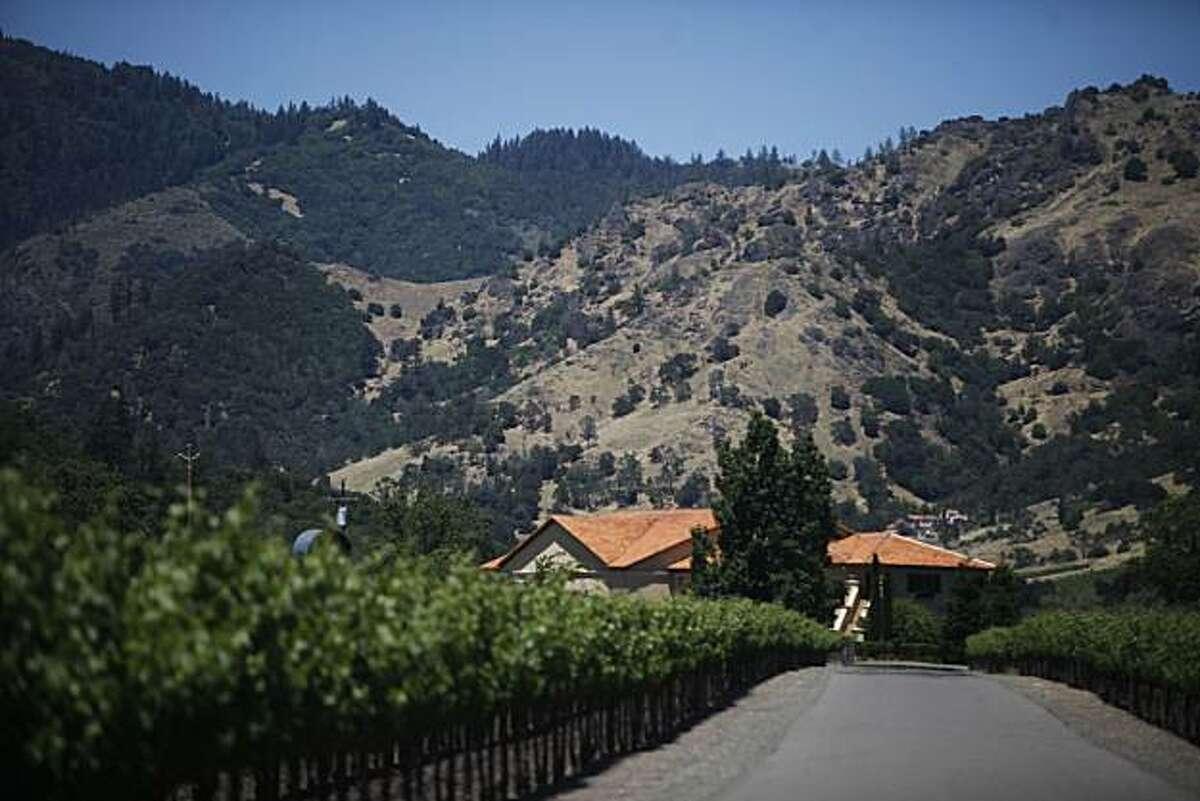 Grape vines line the drive of Bennett Lane Winery on Wednesday June 16, 2010 in Calistoga, Calif.