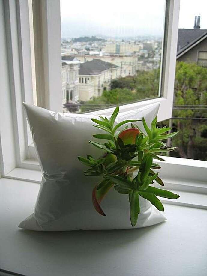 Daniel Robb's resin 'pillows' Photo: Shidume Lozada