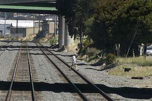 A man walks his dog across train tracks in Albany, Calif., on Wednesday, June 30, 2010. Railway officials from Amtrak and Union Pacific are beefing up enforcement and launching a public awareness safety campaign after several high profile accidents along Amtrak's Capitol Corridor in recent weeks.