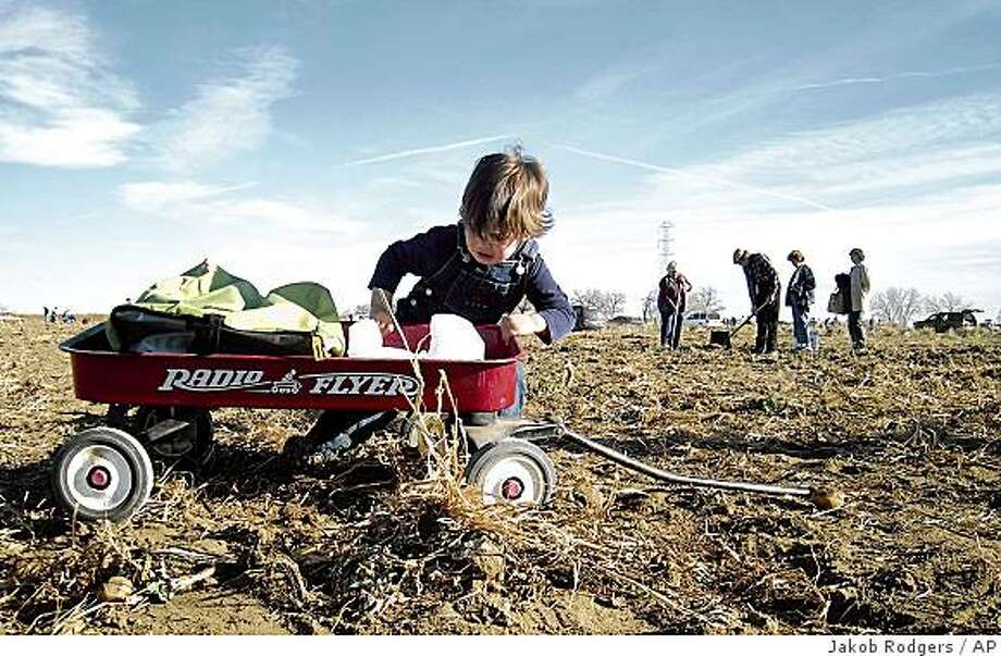 Michael Delgadillo, 2, tries in vain to pull his wagon across a potato field at Miller Farms near Platteville, Colo. on Saturday Nov. 22, 2008. Michael, along with his mother, Erica Delgadillo, and his sister, Alexis, 4, joined the thousands of people who harvested produce from the farm on Saturday afternoon. A second day of a field gleaning for Sunday was canceled because the farm was picked clean. (AP Photo/The Daily Tribune, Jakob Rodgers) Photo: Jakob Rodgers, AP
