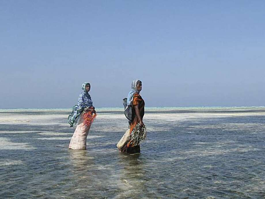Joanna Lipper's photographs of seaweed farmers in Zanzibar are part of an exhibition at San Francisco City Hall of women at work from around the world. Photo: Courtesy, Joanna Lipper