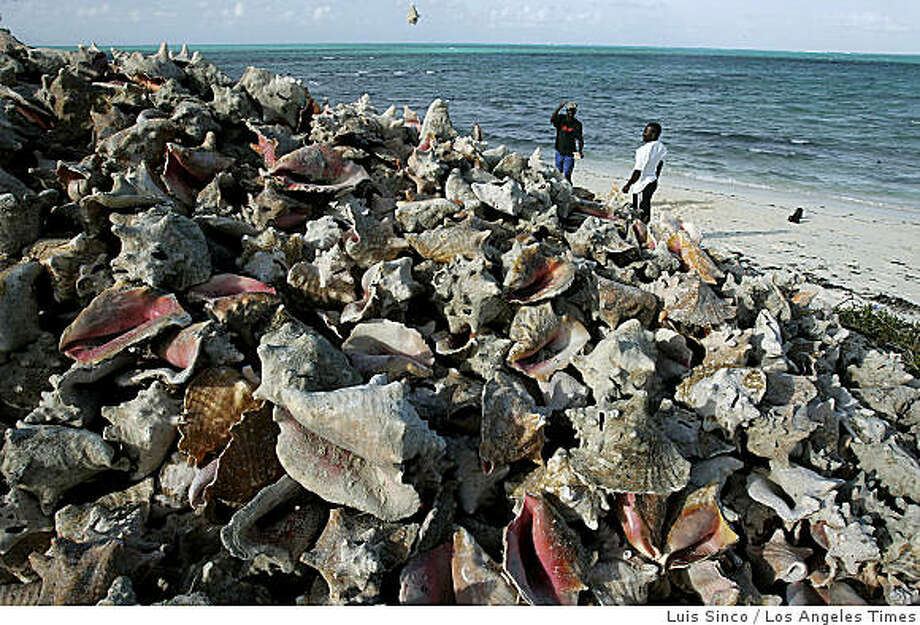 Conch shells pile high on the beach outside the Conch Shack, a Providenciales eatery that prepares the local delicacy in salads, chowders, gumbos and deep-fried fritters. Illustrates TRAVEL-TURKS (category t) by Rosemary McClure � 2008, Los Angeles Times. Moved Tuesday, March 11, 2008. (MUST CREDIT: Los Angeles Times photo by Luis Sinco.) Photo: Luis Sinco, Los Angeles Times