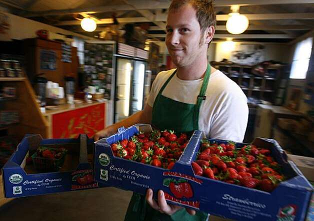Sam Lustig moves boxes of fresh strawberries in the shop at Swanton Berry Farms in Davenport, Calif., on Tuesday, May 25, 2010. The state Department of Pesticide Regulation has proposed methyl iodide for use as a pesticide despite health concerns, especially for pregnant women.  As a certified organic grower, Swanton will not use methyl iodide even if it becomes available. Photo: Paul Chinn, The Chronicle