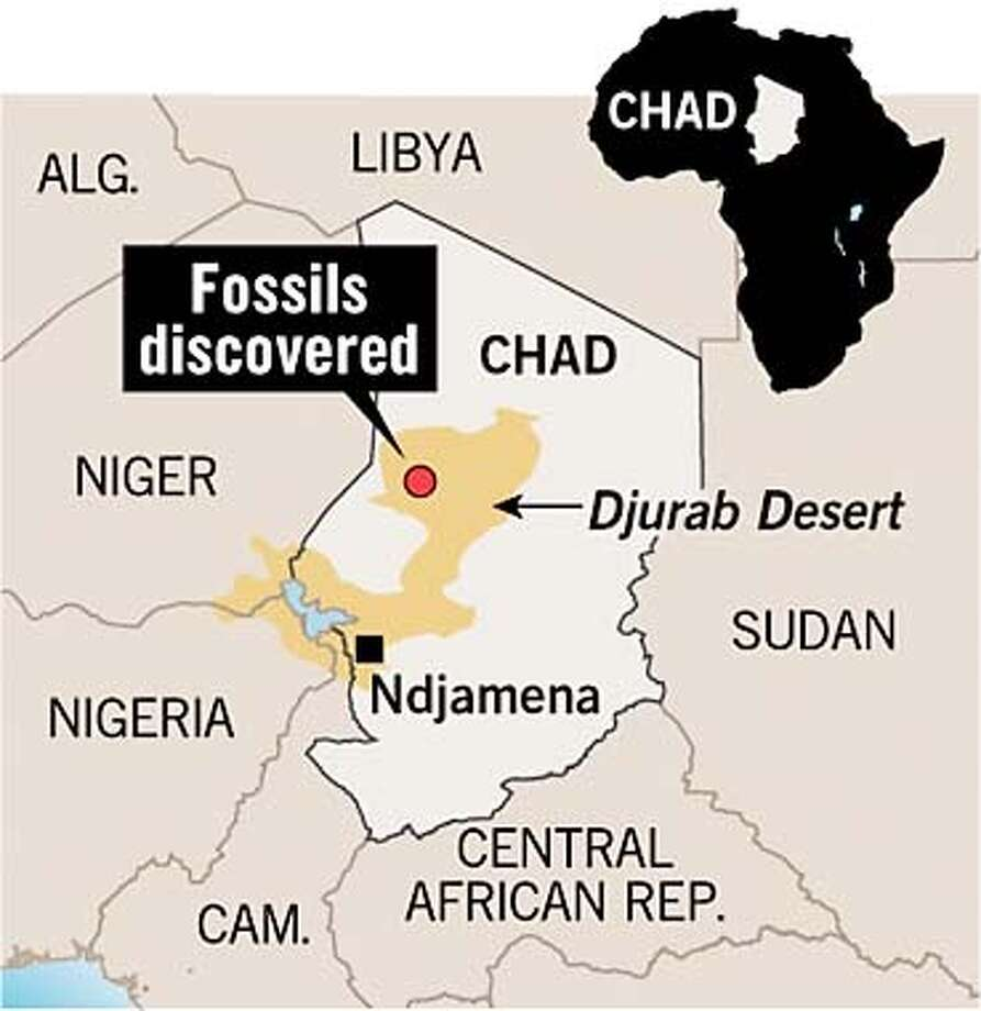 Fossils Discovered. Chronicle Graphic
