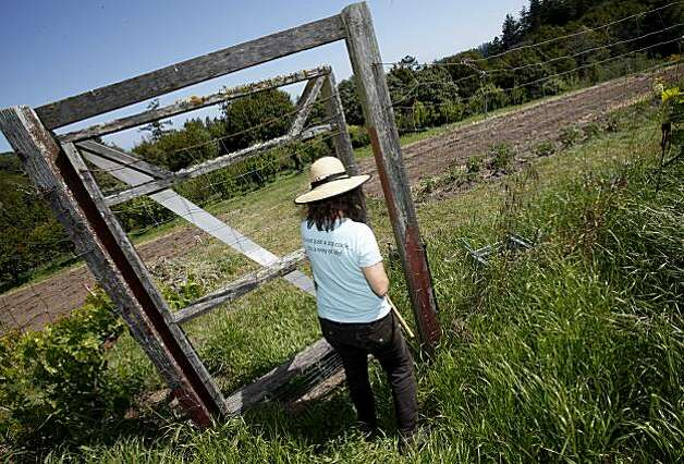 Bette Kroening enters an area of her property where they are growing tomatoes and pumpkins for the restaurant Thursday May 13, 2010. Bette Kroening, who runs the popular Bette's Oceanview Diner in Berkeley, Calif., is now farming a 5 acre ranch near Sebastapol, Calif. with her husband Manfred. Photo: Brant Ward, The Chronicle