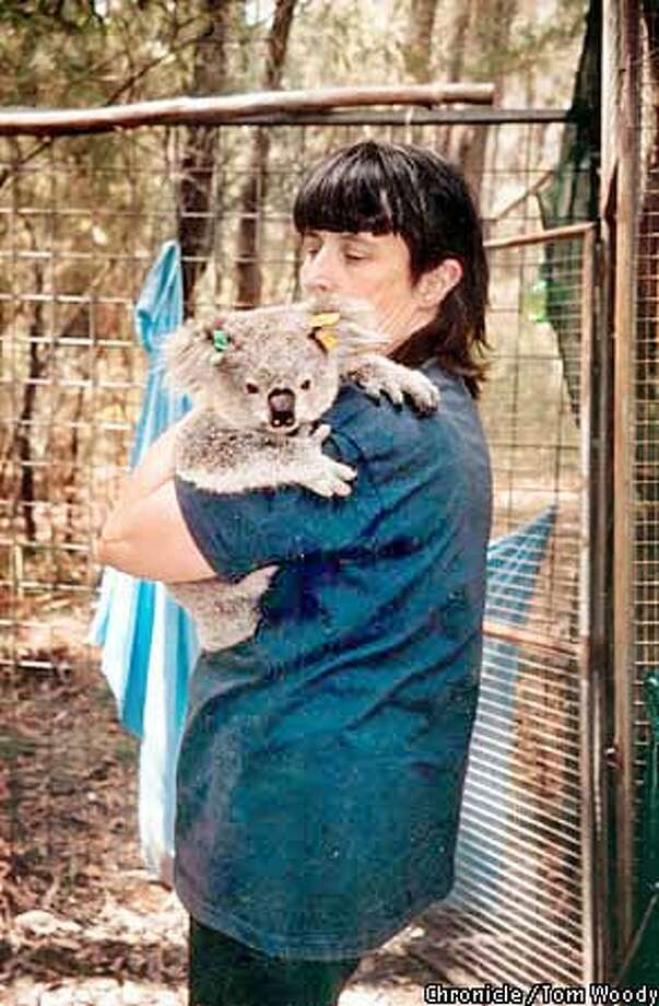 Wildlife rescuer Gaylene Parker holds Sweet Pea, a burned koala she is nursing back to health. The koala is recuperating in Parker's backyard in a converted aviary with a makeshift gum tree. Photo by Todd Woody for the Chronicle