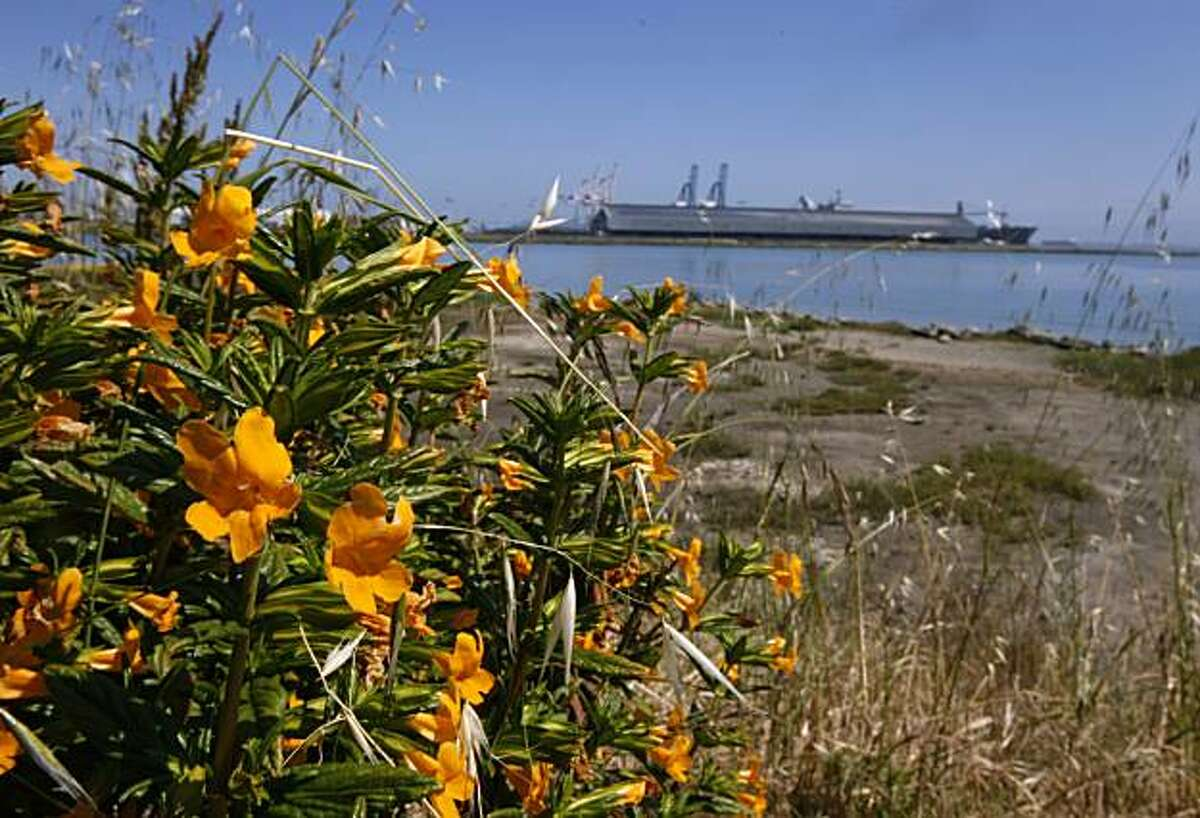 Flowers bloom near the shoreline at India Basin in San Francisco, Calif., on Thursday, May 13, 2010.