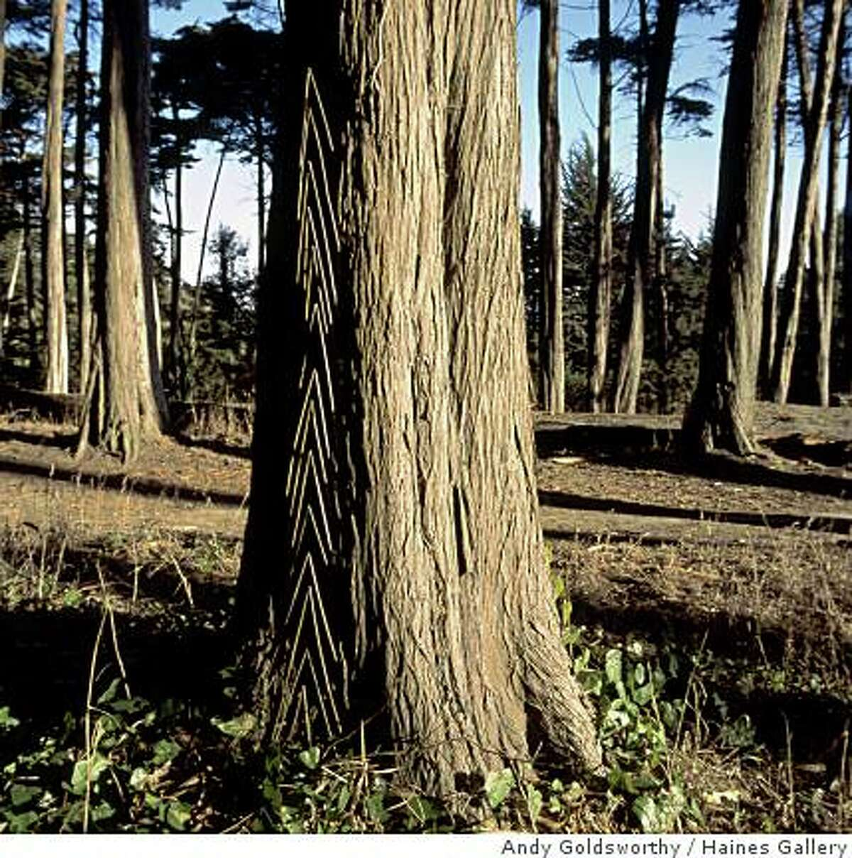 """""""Grass Stalk pushed into Cypress Bark"""" (2008) ephemeral sculpture by Andy Goldsworthy"""