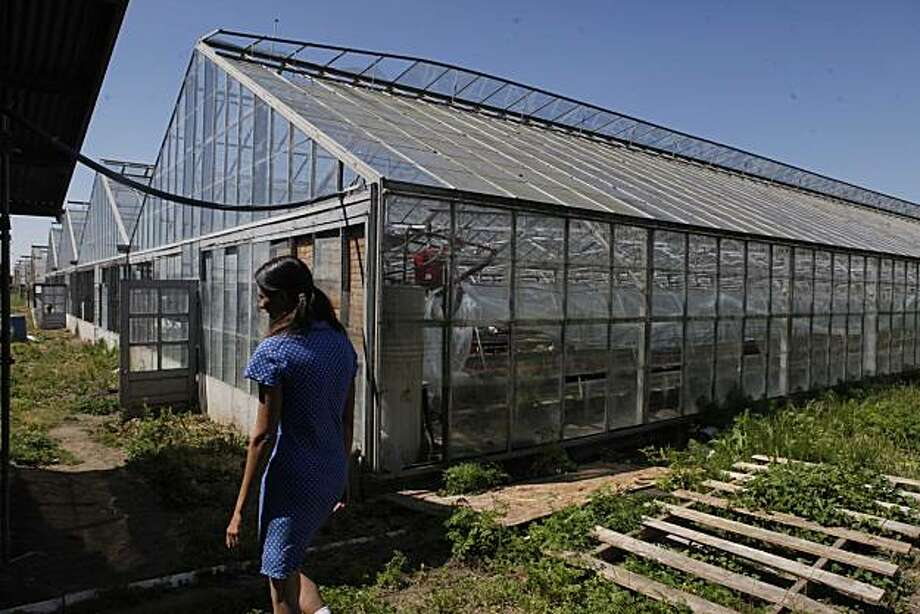 Pilar Reber, owner/operator of Sunnyside Organic Seedlings, walks past the greenhouses at her business on Wednesday May 12, 2010 in Richmond, Calif. Photo: Mike Kepka, The Chronicle