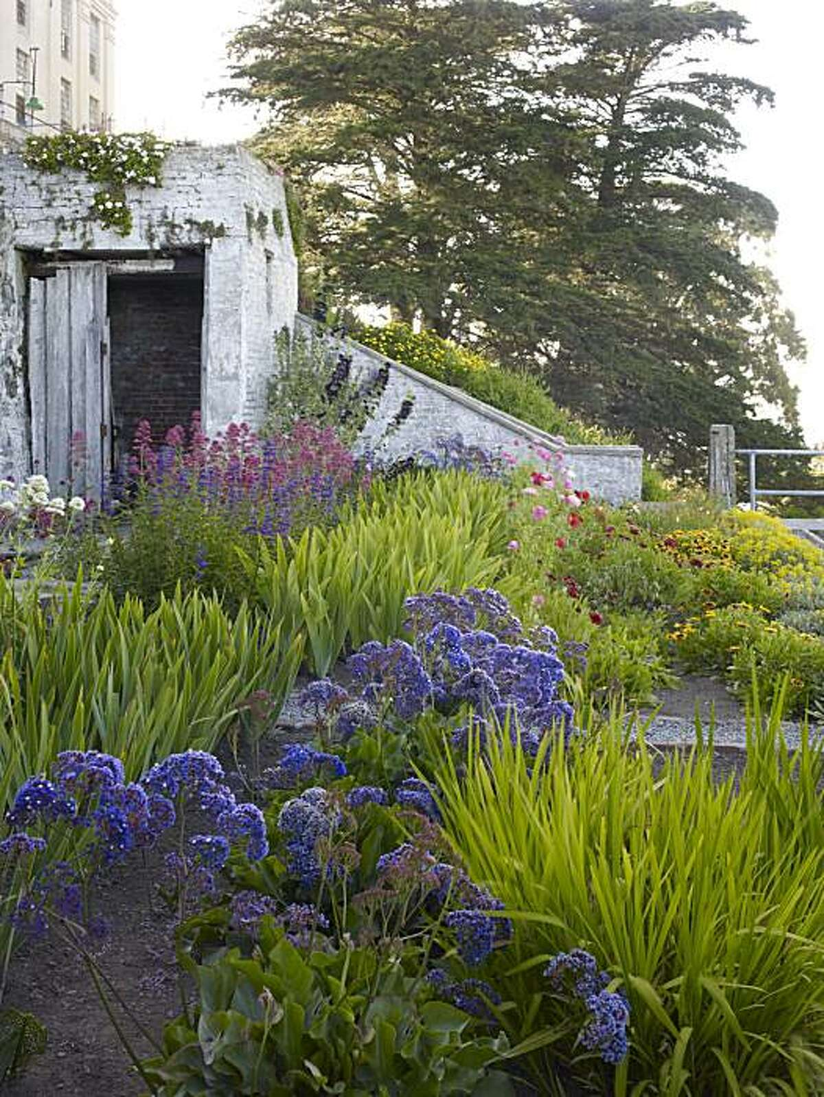 The gardens at Alcatraz
