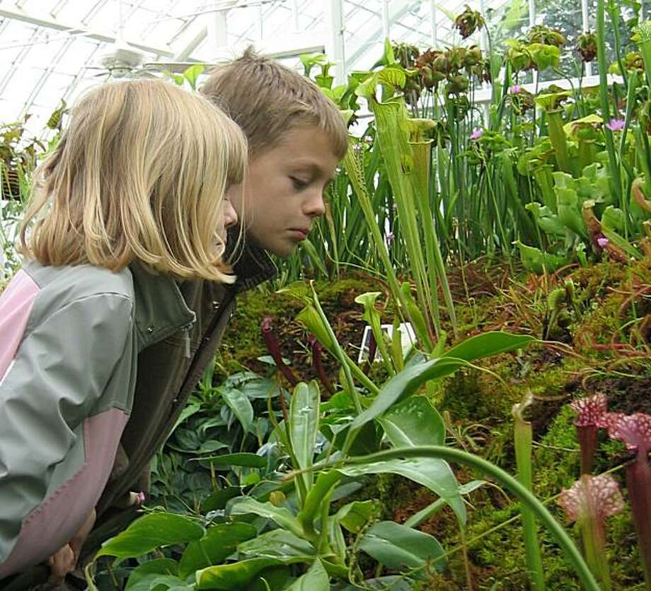 A couple of kids stare down into a pitcher plant to see what it had been snacking on recently at the Conservatory of Flowers. Photo: Conservatory Of Flowers
