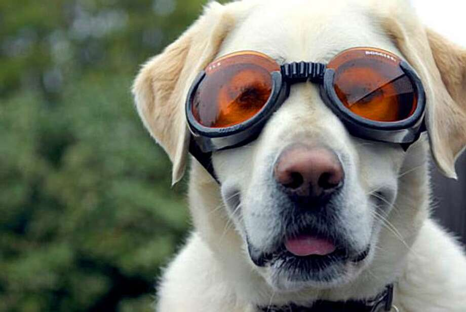 """Chapin wearing his protective """"doggles"""" Photo: Morry Anne Angell"""