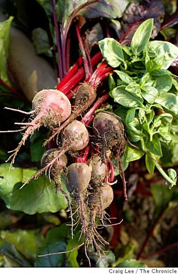 Beets at San Francisco's Bi-Rite Market farm in Sonoma, Calif., on September 26, 2008. Photo: Craig Lee, The Chronicle