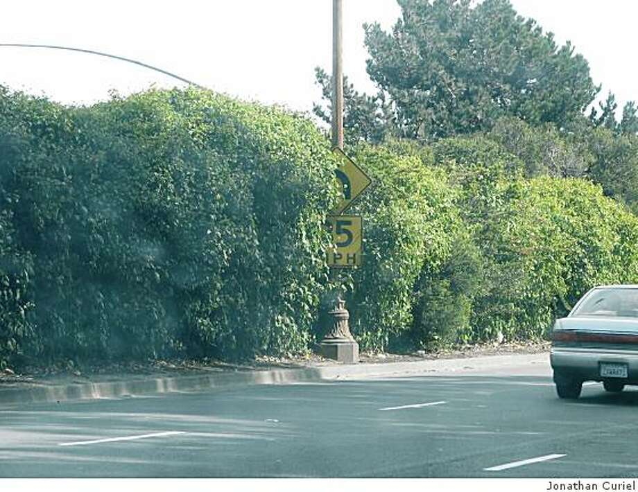 A sign partially hidden by leaves. It's on the Alemany Boulevard turnoff from Highway 280 going south. Photo: Jonathan Curiel