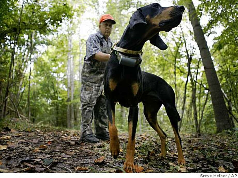 "Retired veterinarian David Birdsall walks his hunting Black and Tan hound Lady on his property at his home in Gloucester, Va., Friday, Sept. 12, 2008. Hunting with hounds in Virginia dates nearly to the founding of Jamestown, America's first permanent English settlement.  A Humane Society,  report concluded, ""the practice of hunting animals with hounds is unsuitable in modern-day Virginia."" (AP Photo/Steve Helber) Photo: Steve Helber, AP"