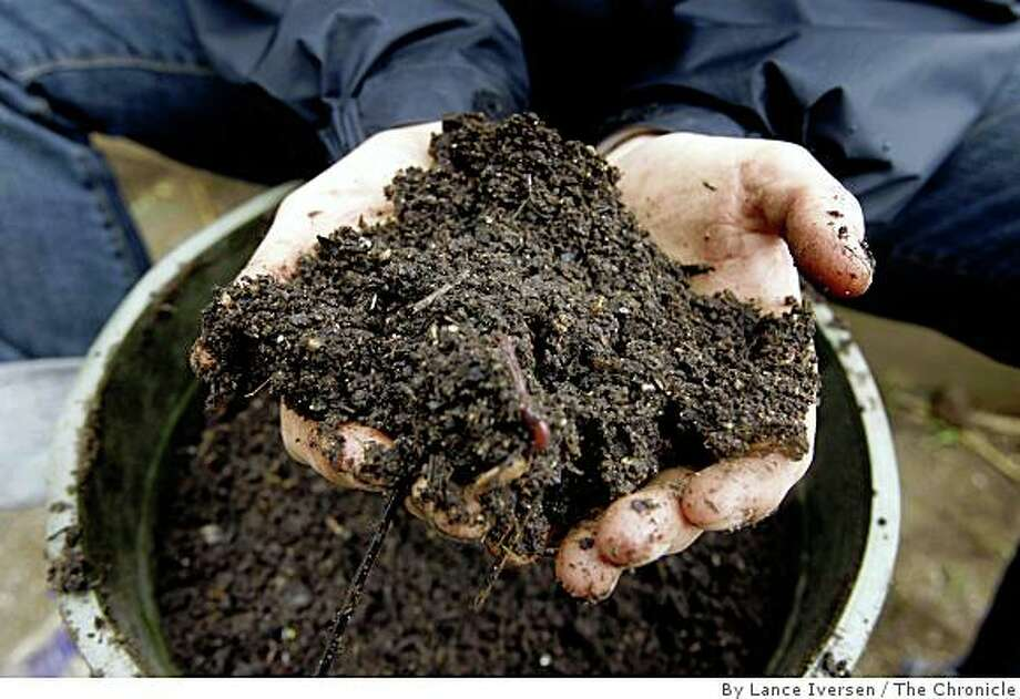 Home made compost  is part of a sustainable garden. Photo: By Lance Iversen, The Chronicle