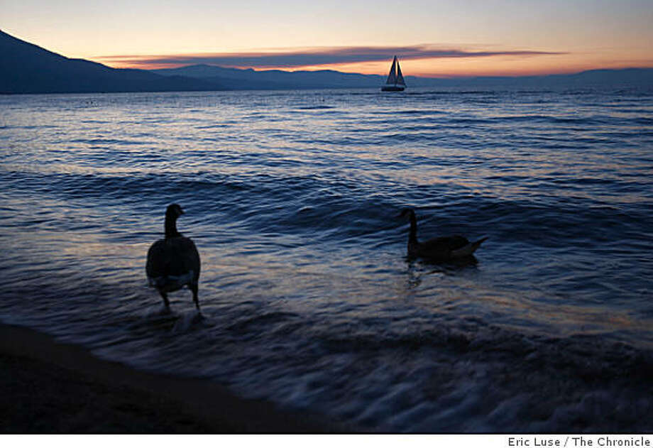 Geese along the shores of Lake Tahoe with a beautiful sunset photographed on Monday, June 23, 2008.  Photo by Eric Luse/ The Chronicle Photo: Eric Luse, The Chronicle