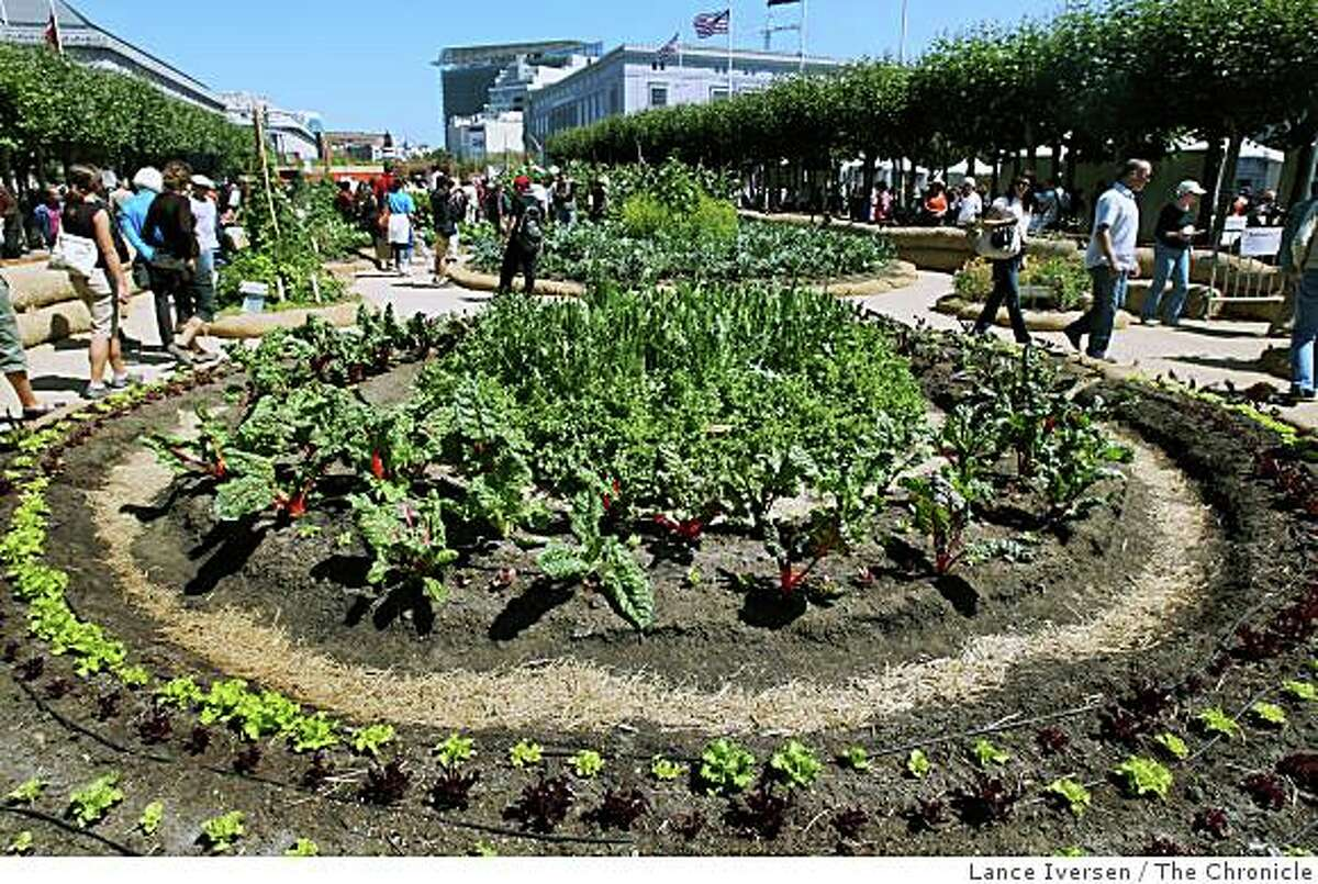 Corn,Lettuce, Swiss Chard, Acelgas, Beets and Lechhuga were just a few of the plants on display in the Victory Garden.