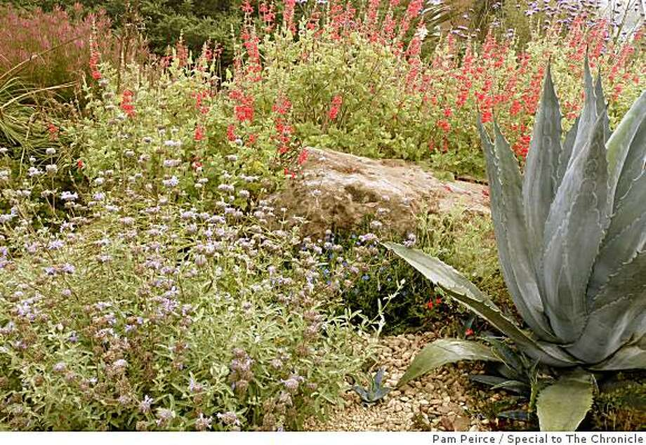 A drought-tolerant garden can be handsome and colorful, even in late summer. Photo: Pam Peirce, Special To The Chronicle