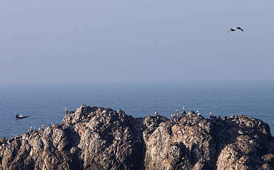 Loons and seagulls on Seal Rock become part of the 2009 San Francisco Christmas Bird Count. Photo: Liz Hafalia, The Chronicle