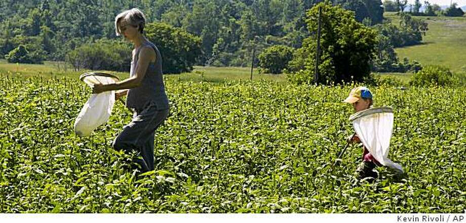 **APN ADVANCE FOR SUNDAY SEPT. 28**  Jaya Walsh and her son Gaelen look for ladybugs while volunteering in the Lost Ladybug Project near Ithaca, N.Y., Saturday, July 12, 2008. (AP Photo/Kevin Rivoli) Photo: Kevin Rivoli, AP