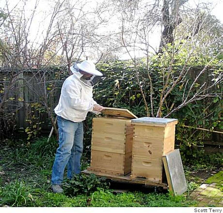 Scott Terry with his bee hives. Photo: Himself