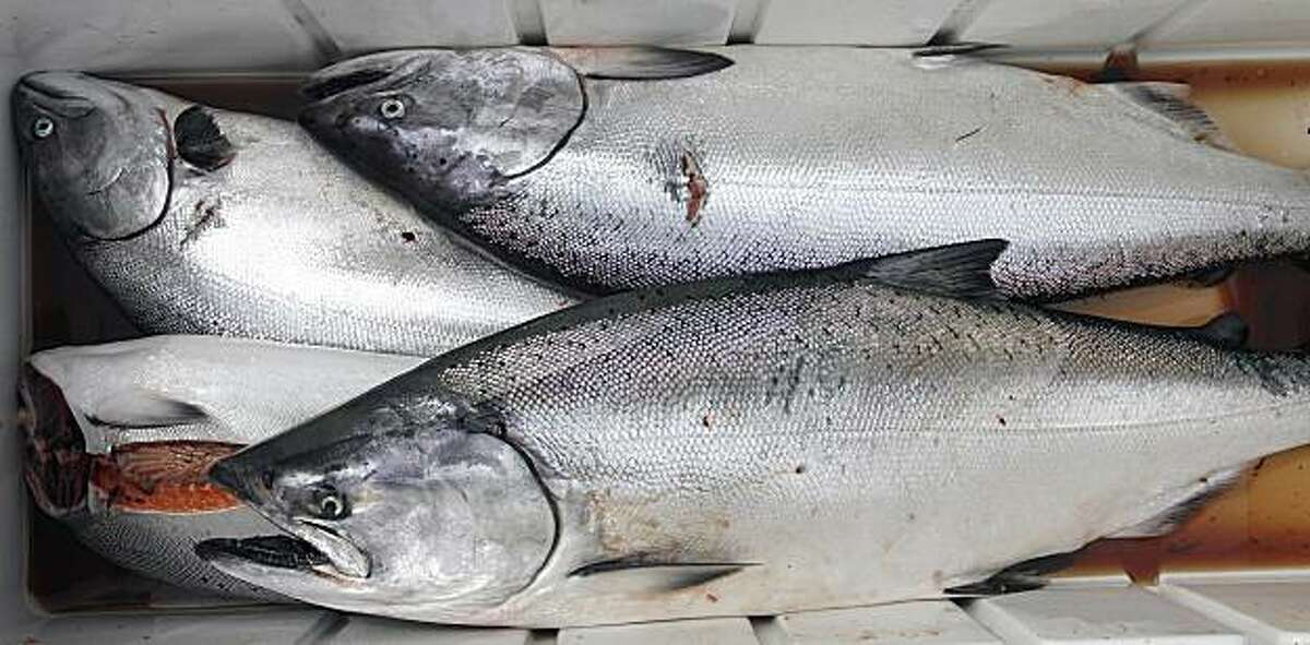 File photo of salmon