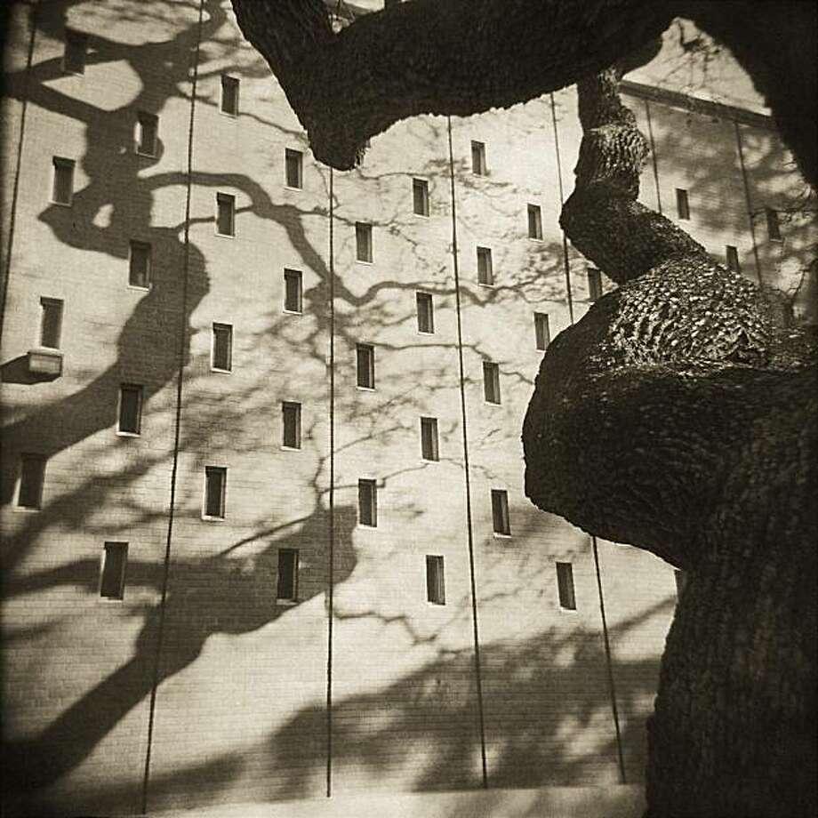"RayKo Photo Center Plastic camera show.   Robert Holmgren ""Old Oak"" (won first prize) Photo: Robert Holmgren"