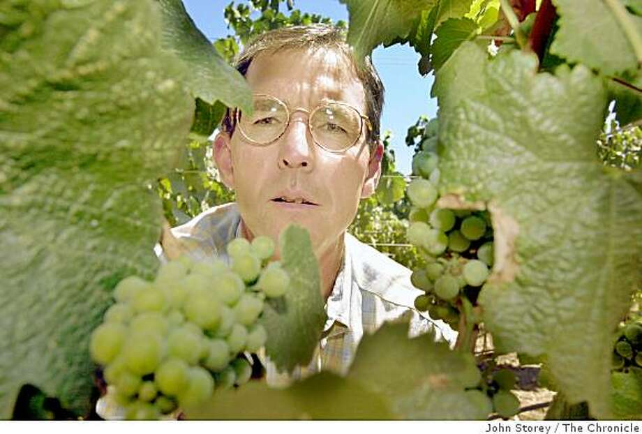 Nick Frey, Executive Director of Sonoma County Grape Growers Association looks at some Chardonnay grapes in Geyserville. Photo: John Storey, The Chronicle