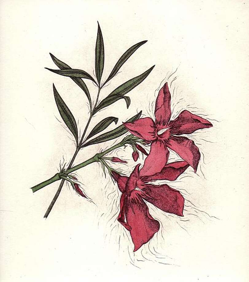 """Oleander, one of the prints featured in an exhibition of works by """"Wicket Plants"""" illustrator Briony Morrow-Cribs at the Bone Room Presents. Photo: Briony Morrow-Cribs"""