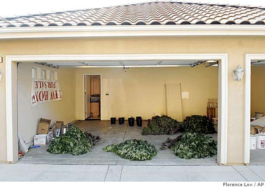 Piles of marijuana plants lie inside the garage of a home in El Dorado Hills, Calif. after a Drug Enforcement Agency raid Tuesday, Sept. 16, 2008. Drug agents arrested six key players Tuesday in what they say was a Sacramento-based ring that was growing hundreds of marijuana plants in upscale suburban homes. (AP Photo/The Sacramento Bee, Florence Low) Photo: Florence Low, AP