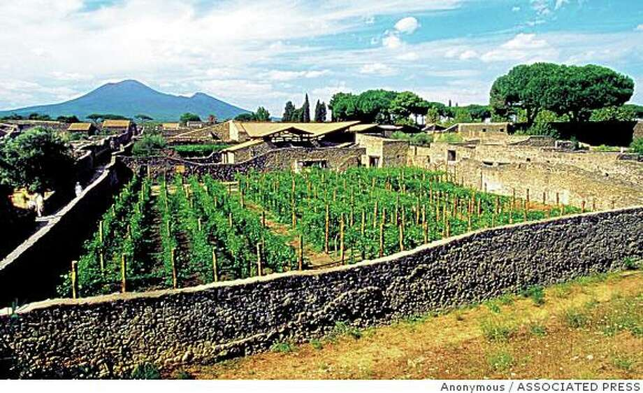 An undated view of the Caupona del Gladiatore vineyard in the ancient town of Pompeii, near Naples, southern Italy. Reviving a long-lost wine making tradition in Pompeii, an Italian company  has produced a ruby red, fruity wine from native grape varieties, grown within the walls of the archaeological site and cultivated using ancient techniques. About 150 of 1,721 bottles were auctioned off Tuesday night, April 29, 2003,  in a Rome hotel,  with bidders paying up to 850 euros (US$940) for a case of six.In the background is Mt. Vesuvius volcano. (AP Photo/Mastroberardino, Handout) Photo: Anonymous, ASSOCIATED PRESS