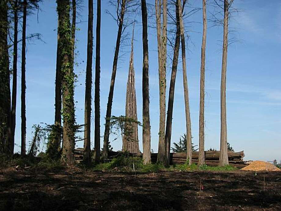 Spire, an environmental art installation in the Presidio, is by Andy Goldsworthy, Photo: Courtesy, John King