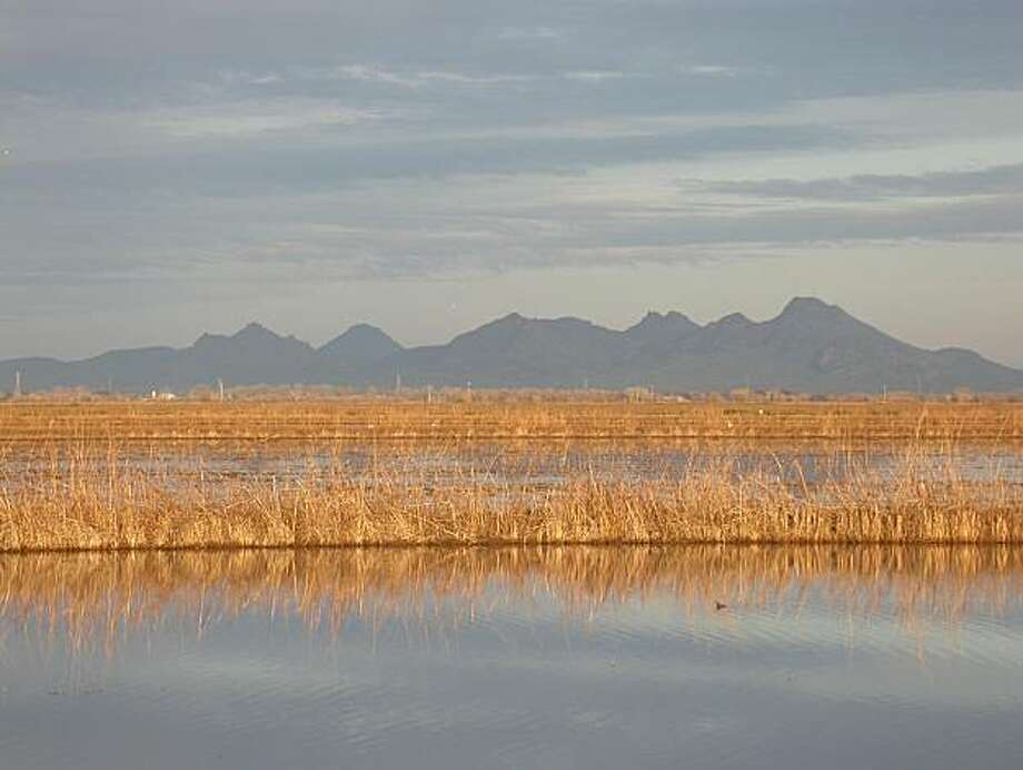 Sutter Buttes from marsh outside of Williams, looking east Photo: Courtesy Photo