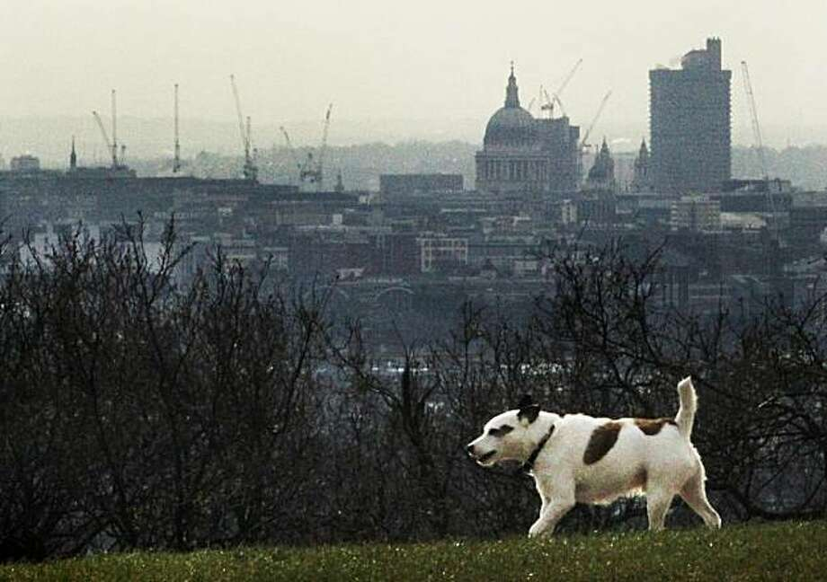 A dog walks past a landscape of central London, on Hampstead Heath in London, Tuesday, March 9, 2010. The British government have launched a new proposal which requires that all new dog owners fit their pets with microchips and that canine insurance is made compulsory. Photo: Matt Dunham, AP