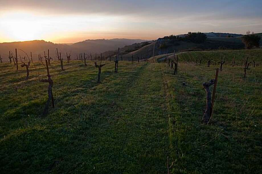The sun sets over the dormant grape vines of Ridge Vineyards in the Santa Cruz Mountains on Wednesday, February 17, 2010. Photo: Chad Ziemendorf, Special To The Chronicle