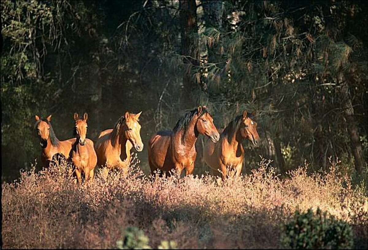Wild Horse Sanctuary open house