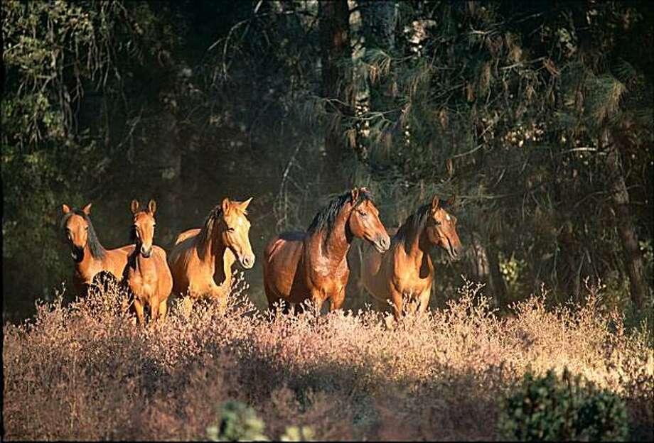 Wild Horse Sanctuary open house Photo: © Katey Barrett 2008