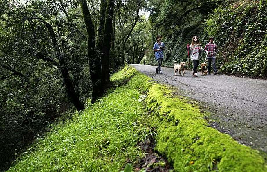 Henri Smith, 10, Sam Fletcher, 12 and Lulu Fletcher, 10 walk their dogs, Rover and Lola through the Butters Canyon Conservancy in Oakland, Calif. on Tuesday Mar. 2, 2010. The City of Oakland has managed to scrape together enough money to save the Oakland Hills Canyon from development. Photo: Michael Macor, The Chronicle